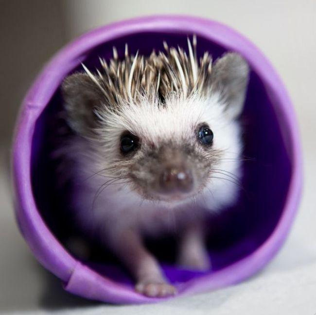 Ёжики: интересные факты об этих удивительных животных