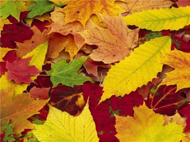 День Осеннего равноденствия в 2015 году, начинается 23 сентября.