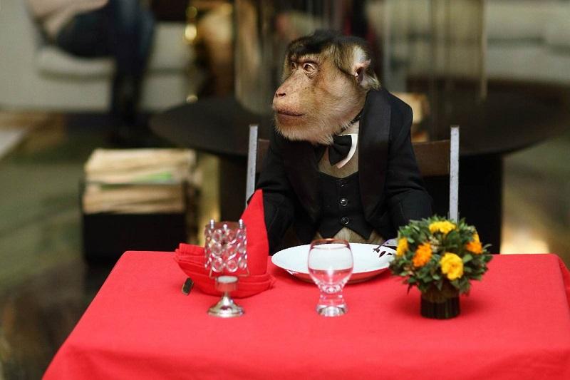 обезьяна за столом