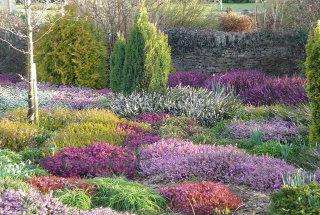 Вересковый сад – вершина ландшафтного дизайна