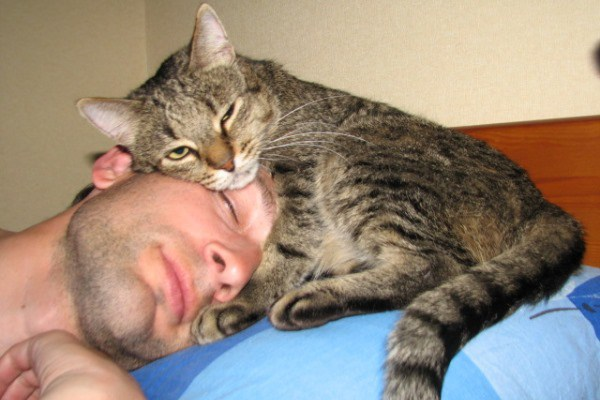 Кошка спит на своем хозяине
