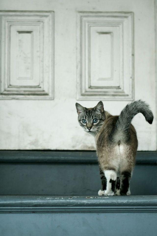 Кошка показывает попу