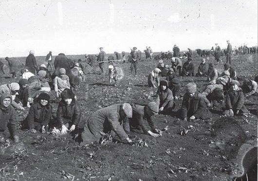 Раскулачивание крестьян в ссср: кто такие кулаки? Крестьяне, СССР, борьба, кулак, хозяйство