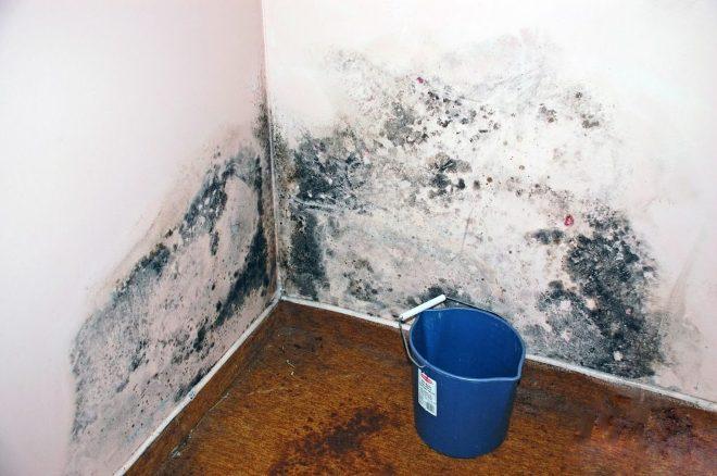 Чем опасна плесень на стенах в квартире