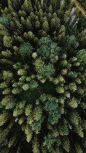 green pine tree during daytime
