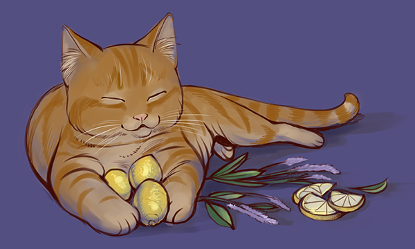 Kitty with lavender and lemons.