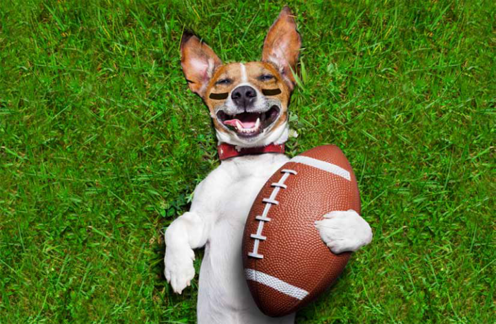 Puppy Bowl 2018 Article Feature