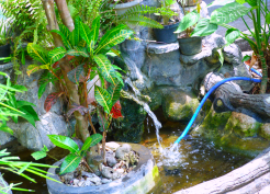 taman kolam