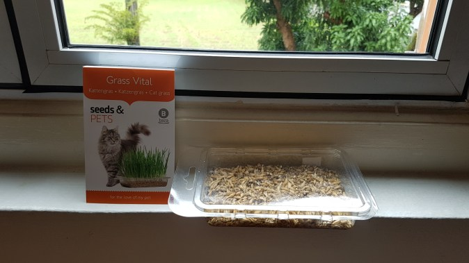 Cat grass planted