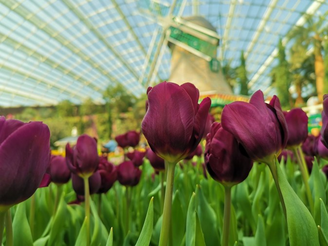 Flower Dome Tulipmania