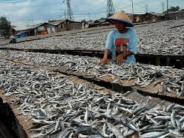 Peluang Usaha Hasil Laut - Peluang Usaha Hasil Laut