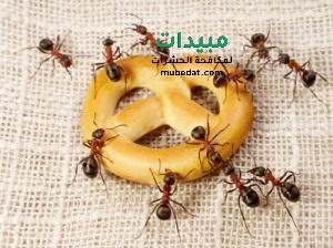 حشرات المنزل الزاحفة