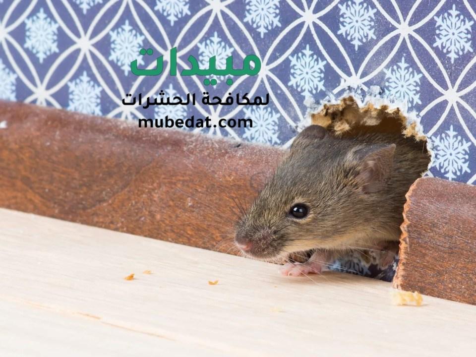 مكافحة الفئران والجراذي ببساطة