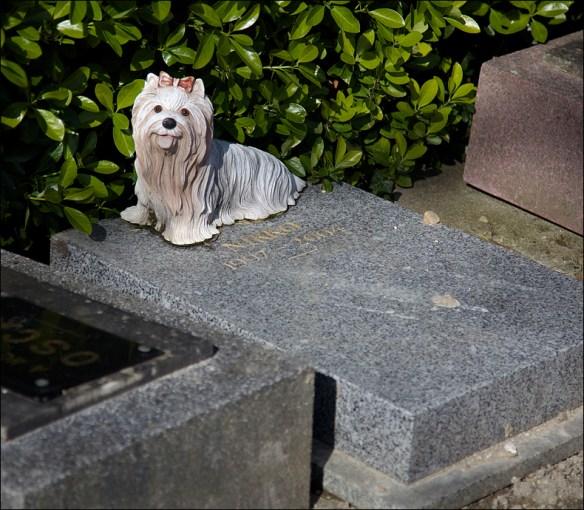 The grave of Nikko; Steve Sampson