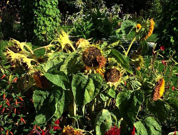 Jardin des Plantes, pic: Cynthia Rose
