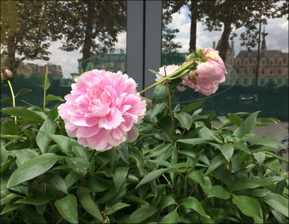 Peonies are everywhere; pic: Cynthia Rose