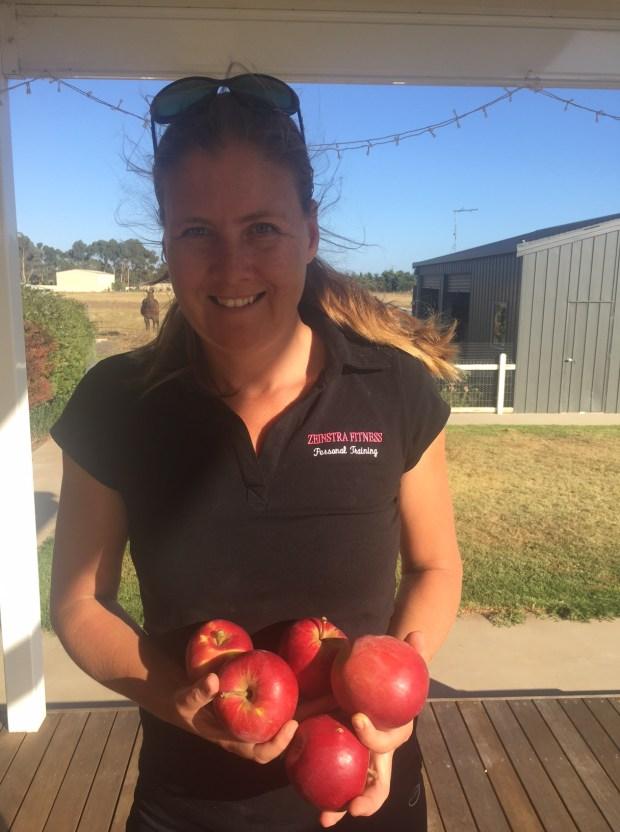 First apple harvest