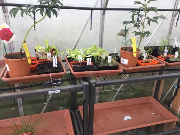 Greenhouse - seedlings