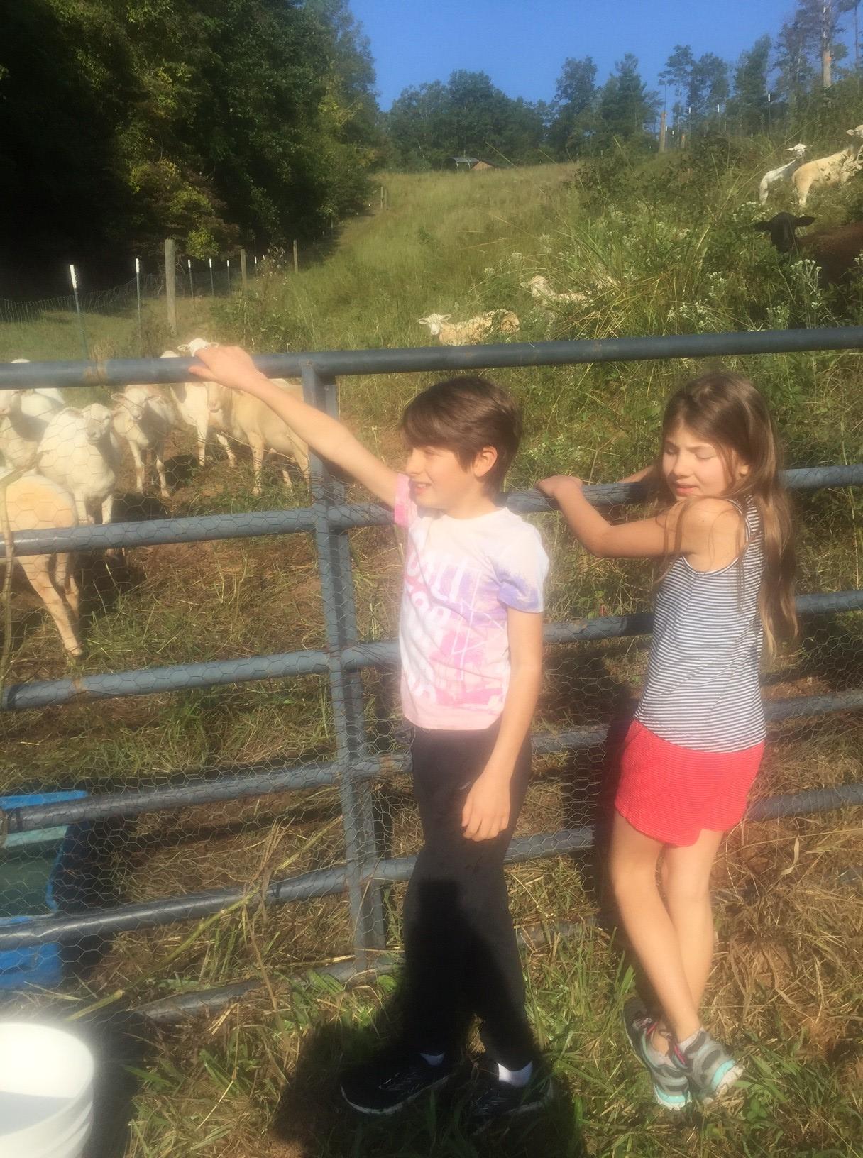 Frannys meeting the sheep