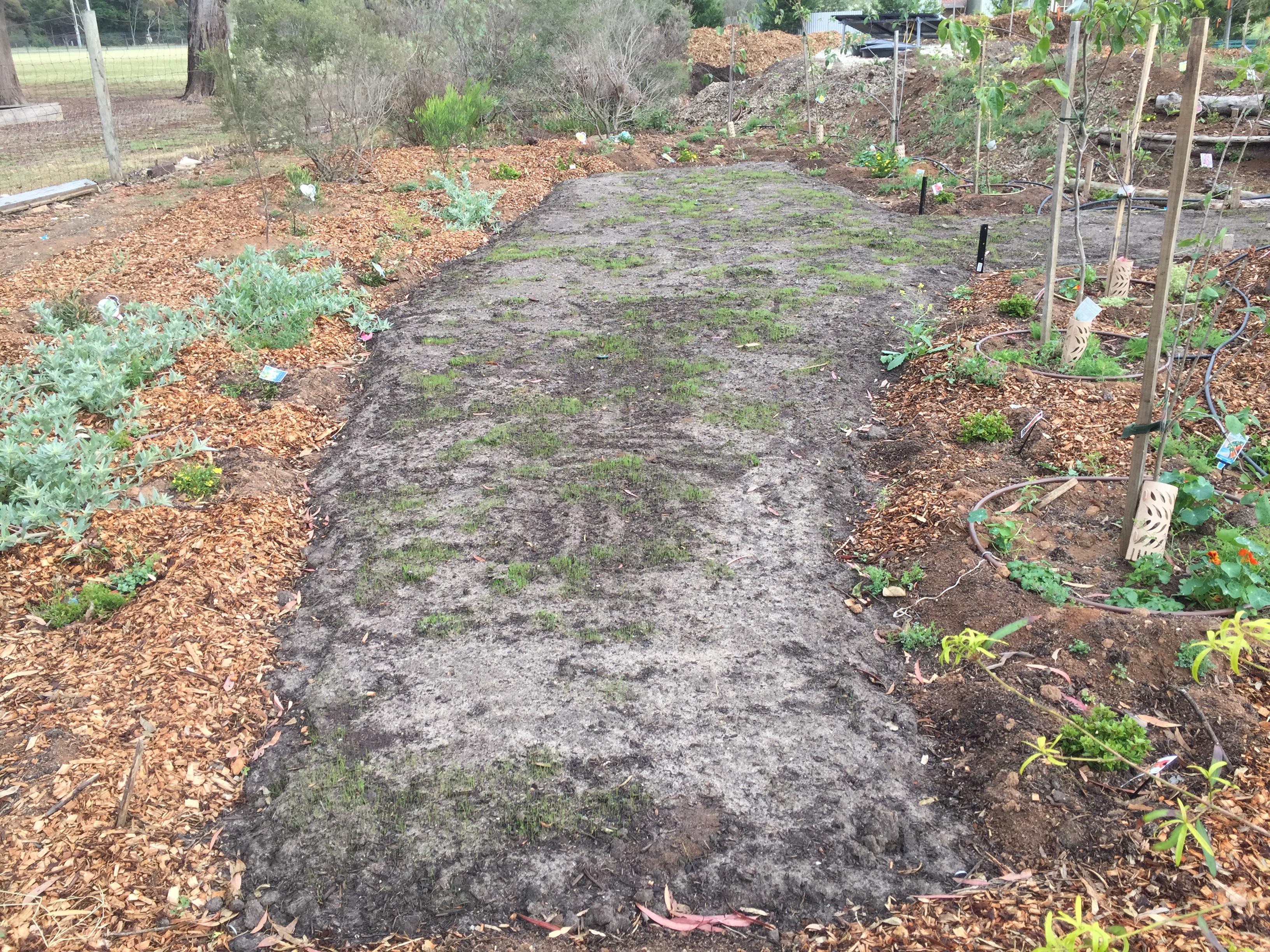 Secret garden lawn growing