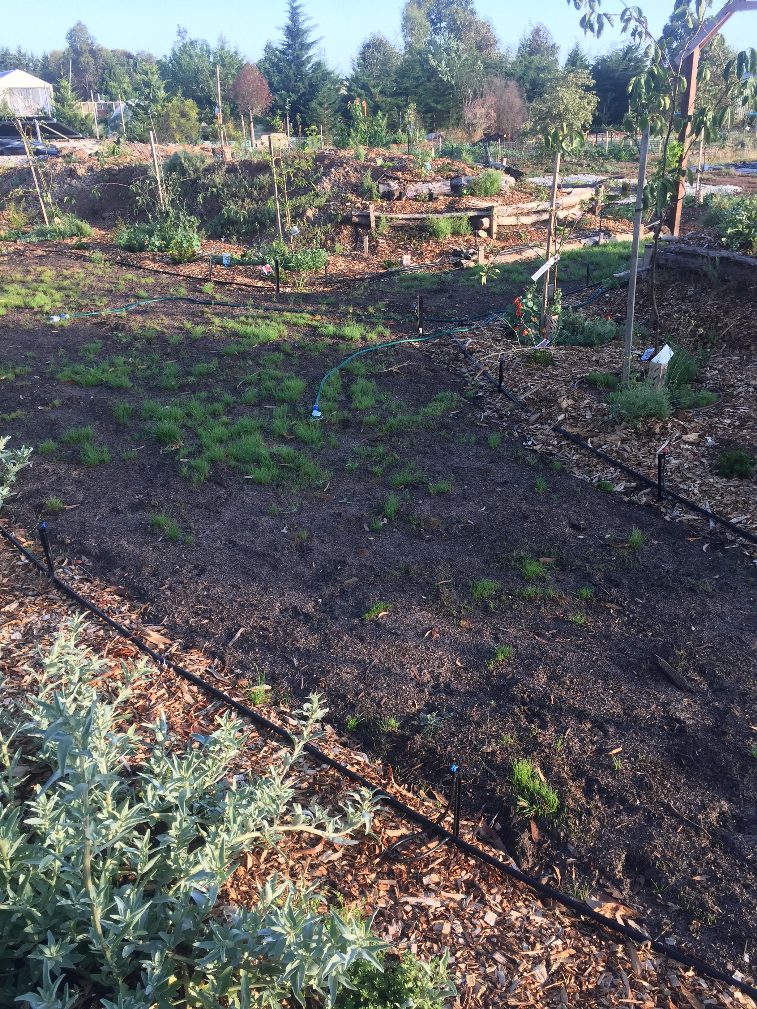 ESummer grass secret garden
