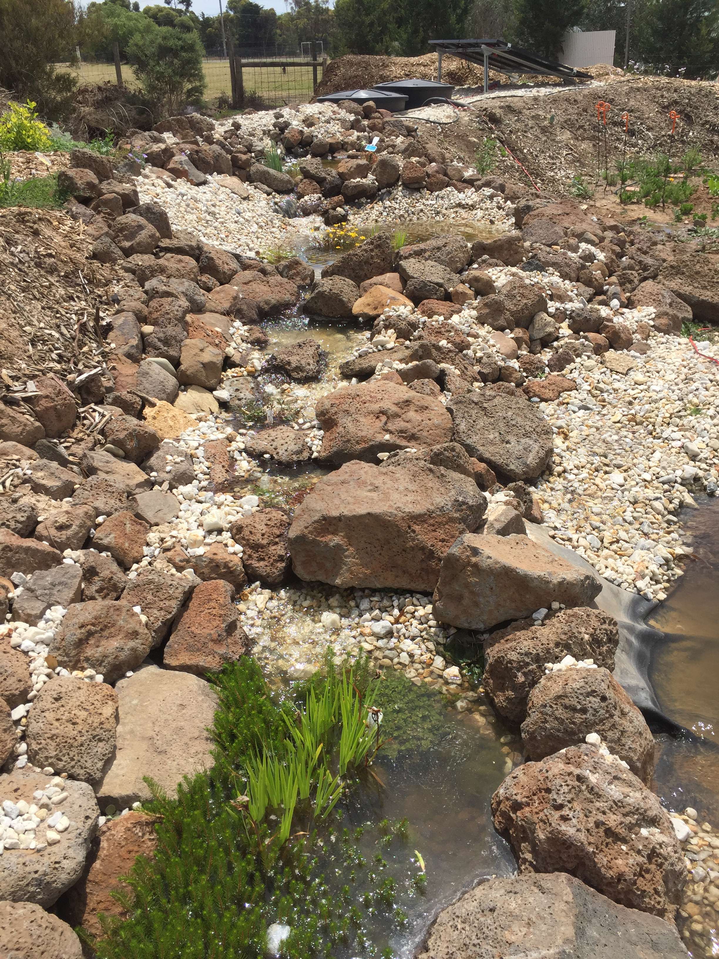 Pond – feature