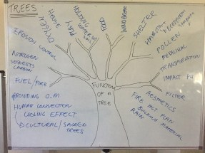 The various functions of a tree