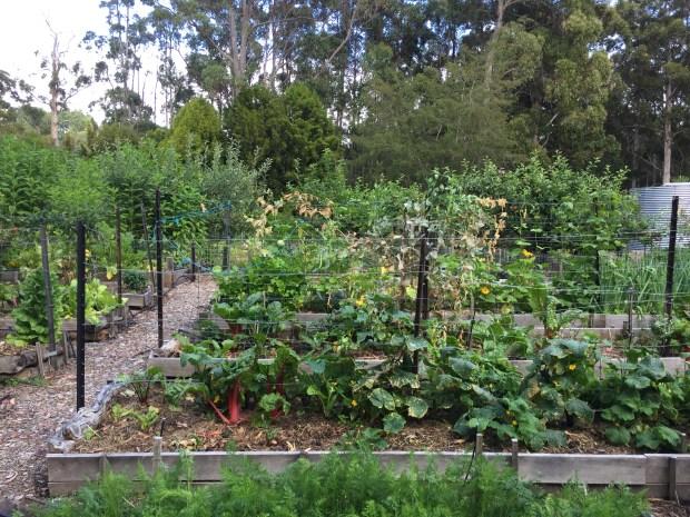 PDC site vegetable garden