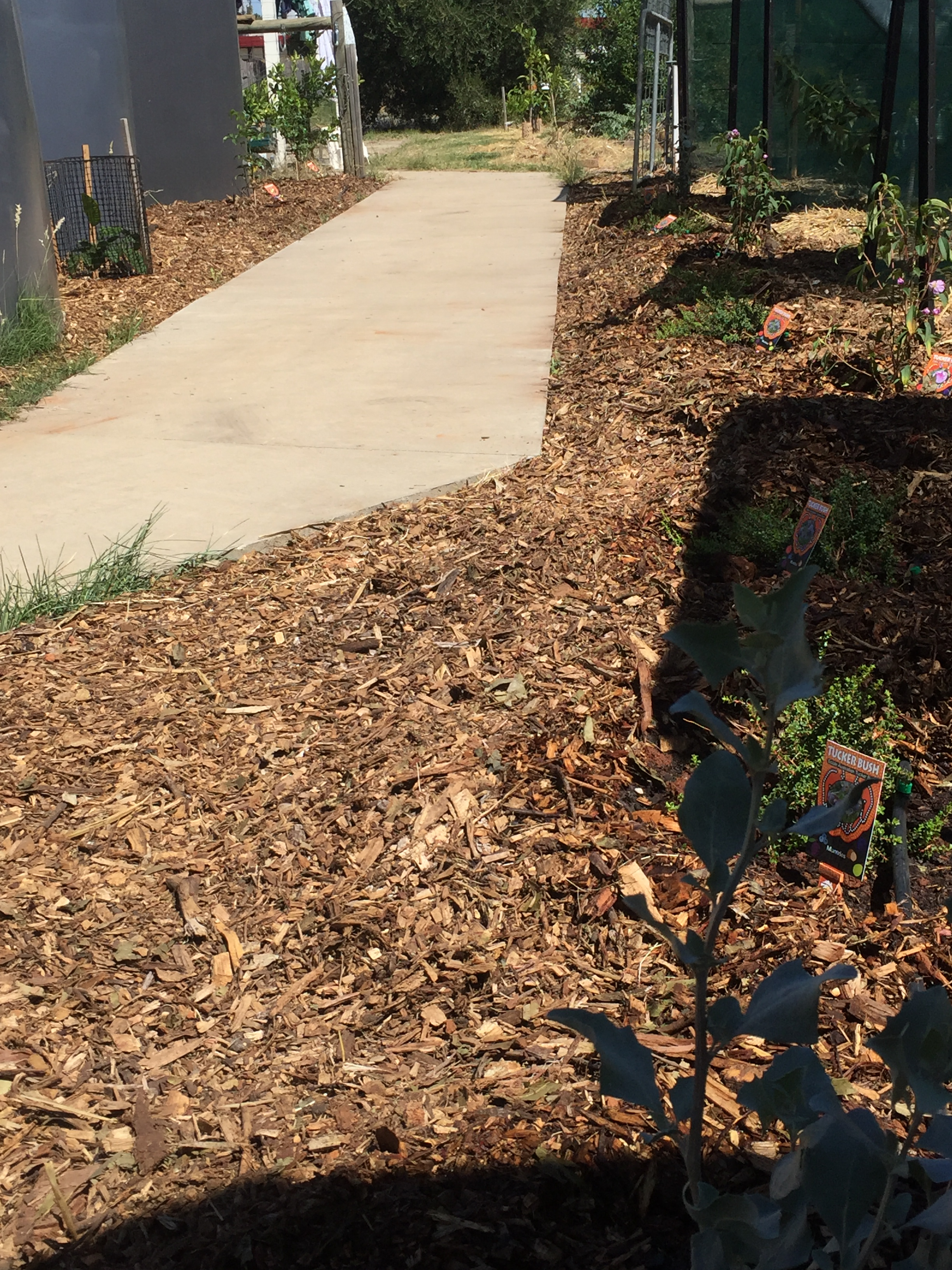 Walk – bush tucker alley