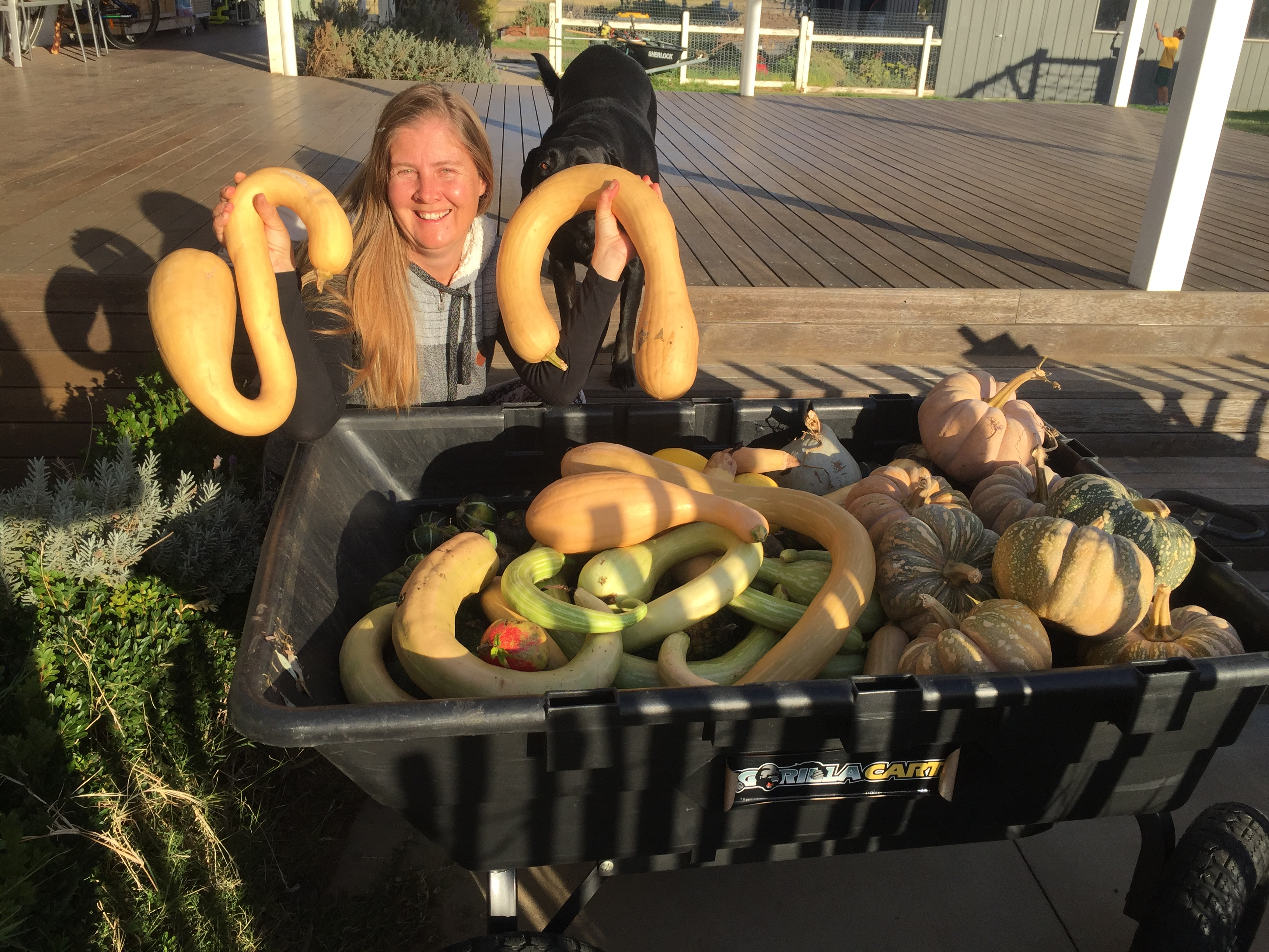 fall – pumpkin harvest 2