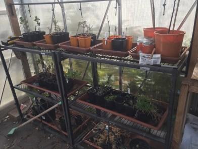 seed - cuttings