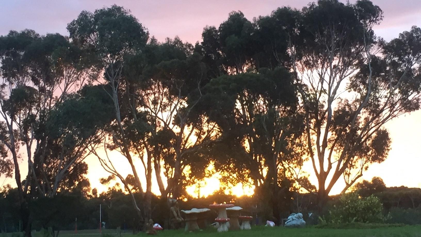 fall – sunset