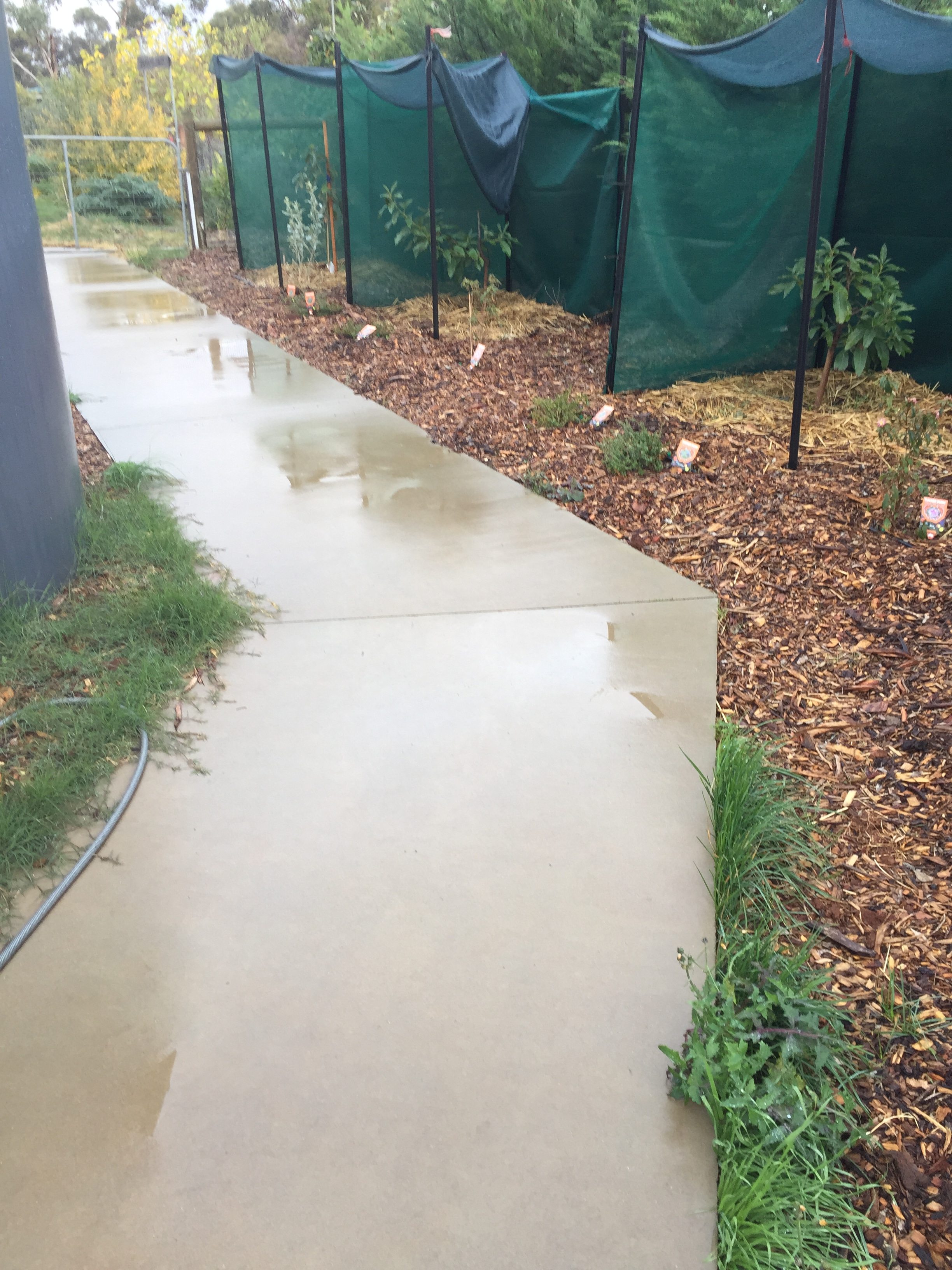 Rain – path