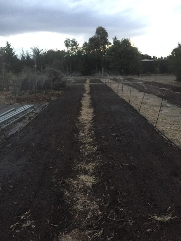 Veg - irrigation 2