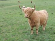 Clyde - coos 1