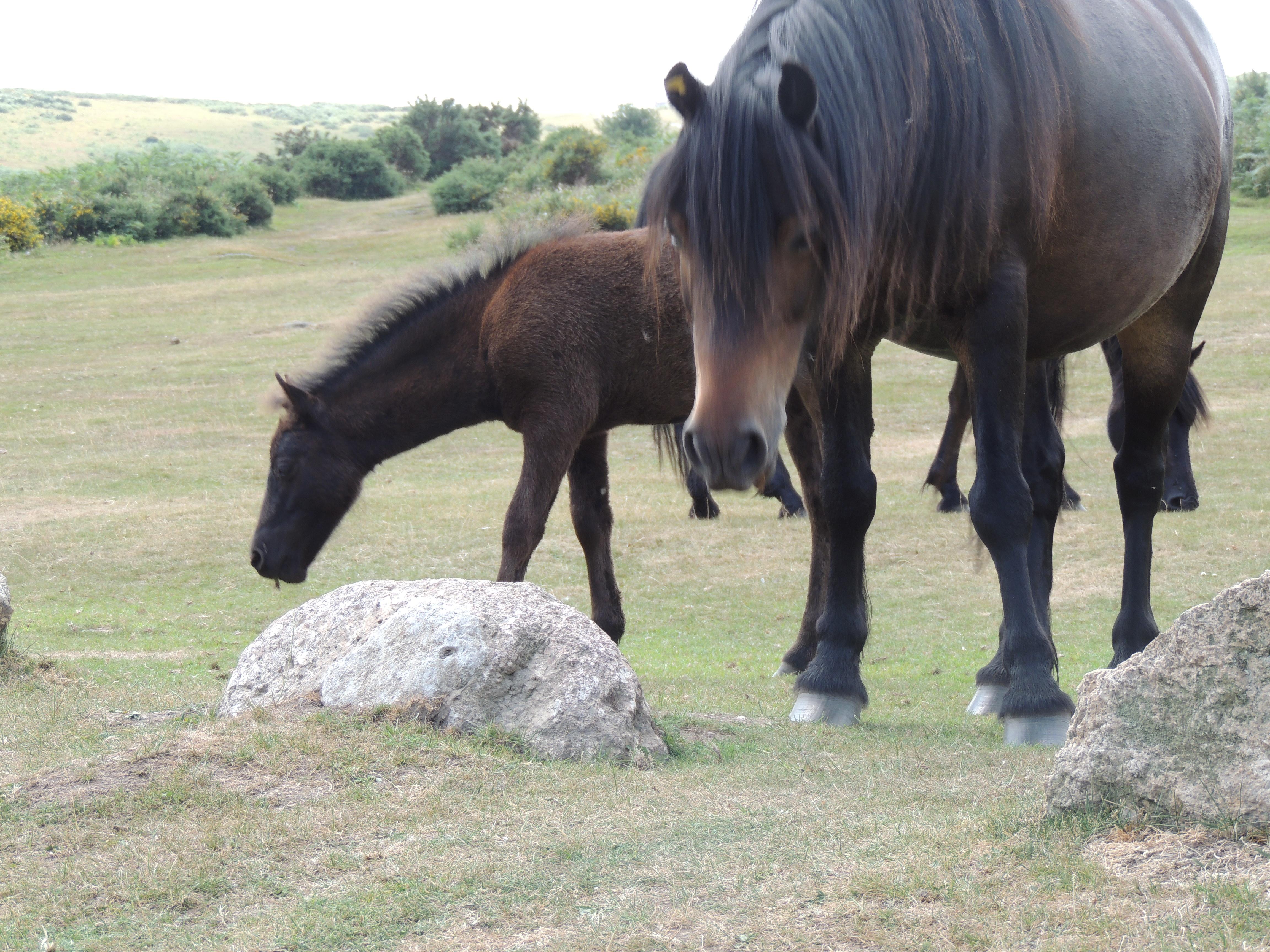 Dart – ponies 1