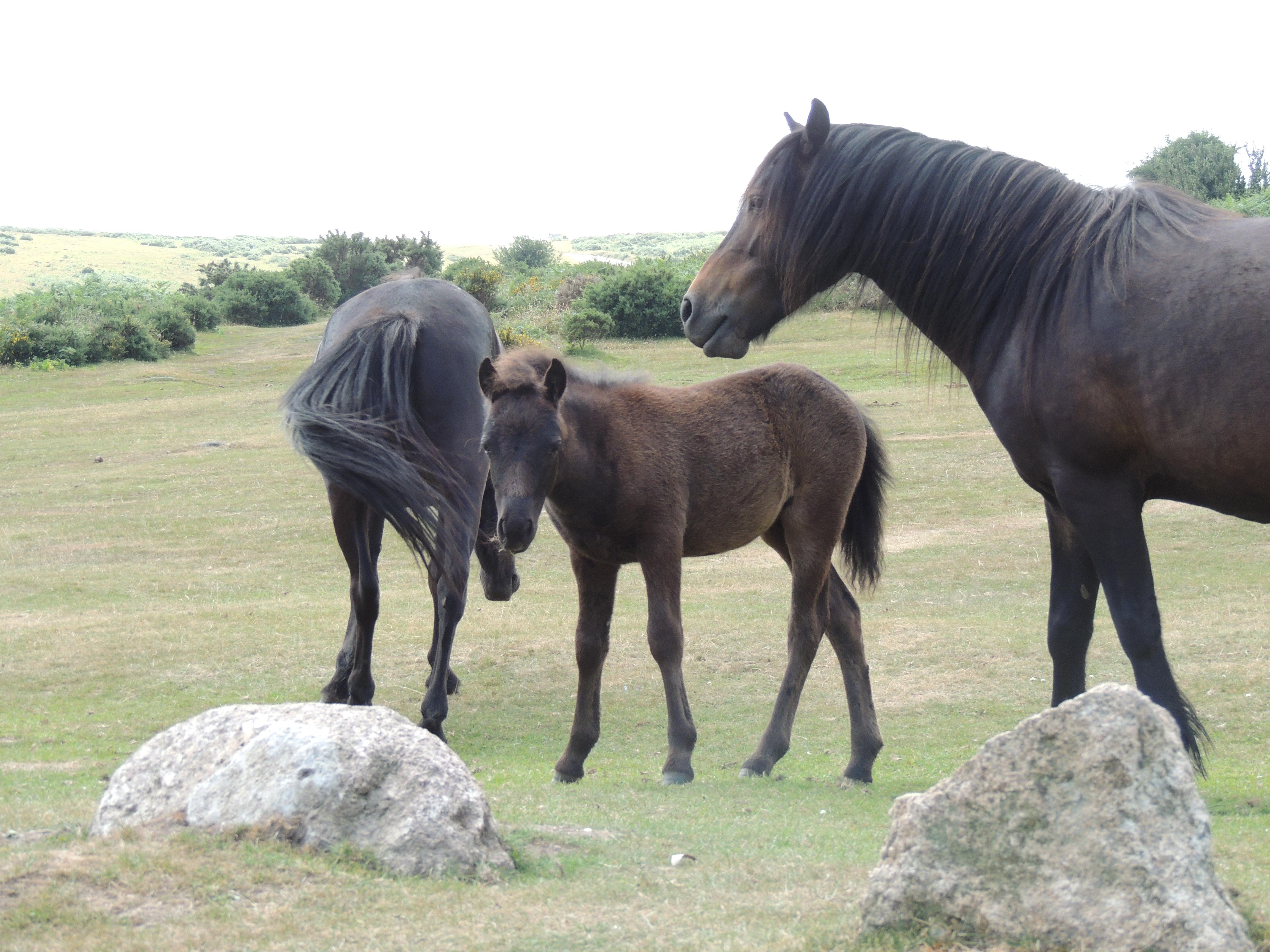 Dart – ponies 2