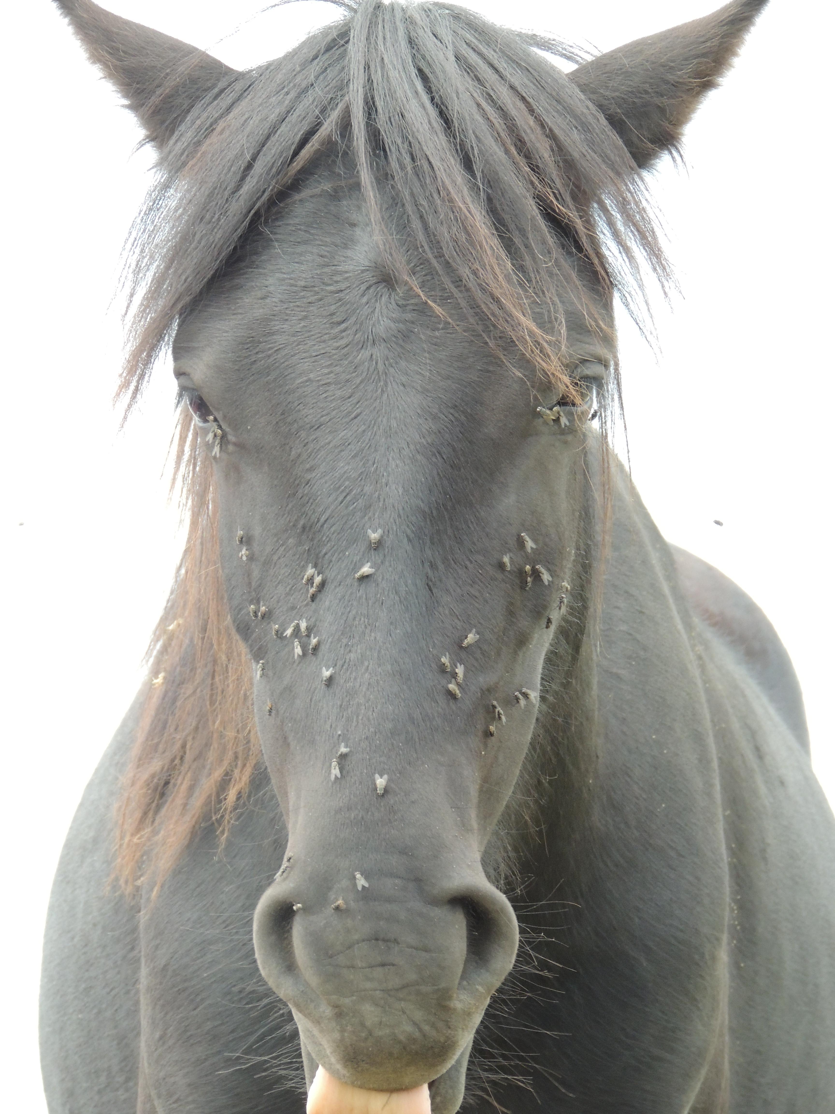 Dart – ponies 4