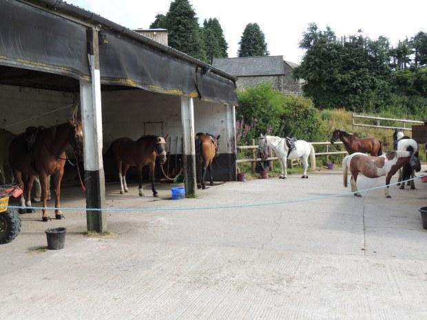 Dart2 - stables