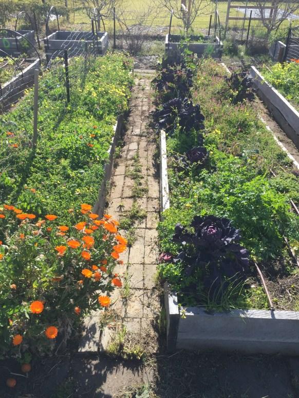 Grind - compost fodder