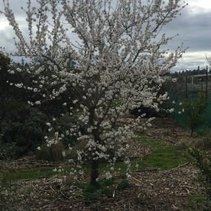 Grind - nut blossoms