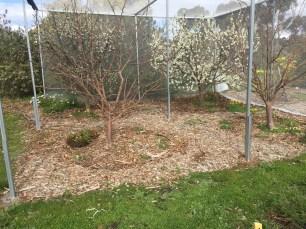 Grind - plum blossoms