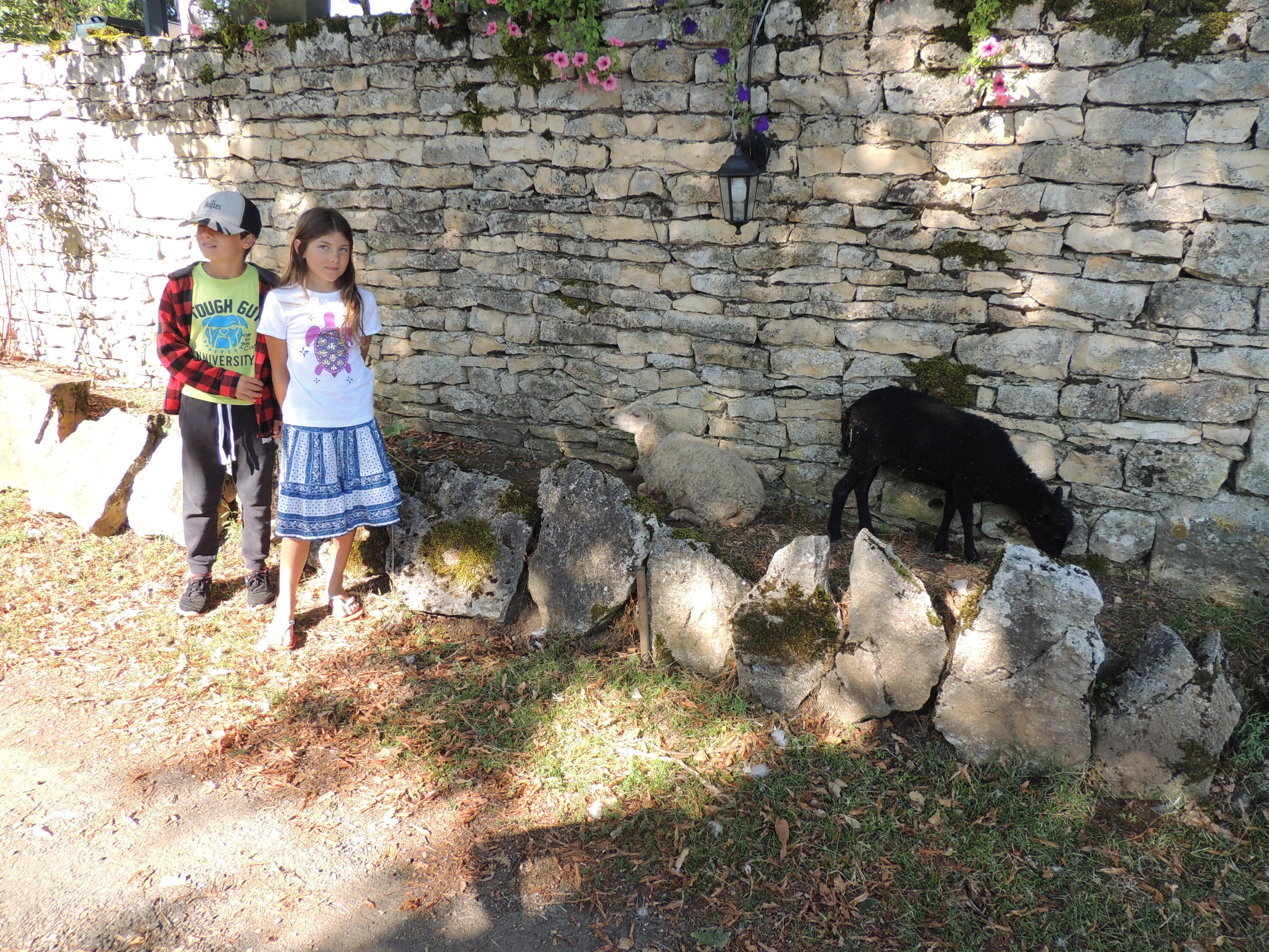 LF – kids and sheep