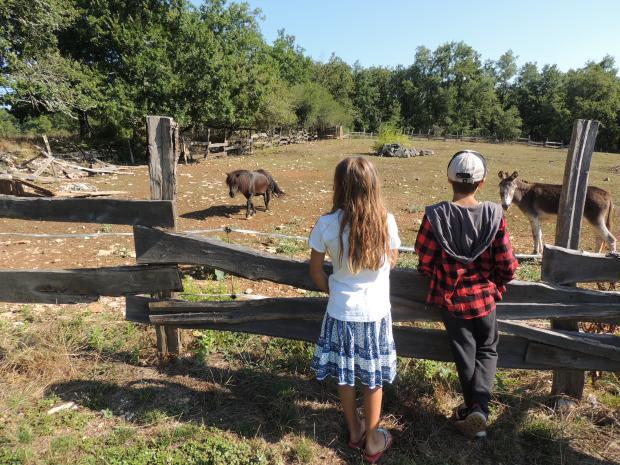 LF - kids horse donkey