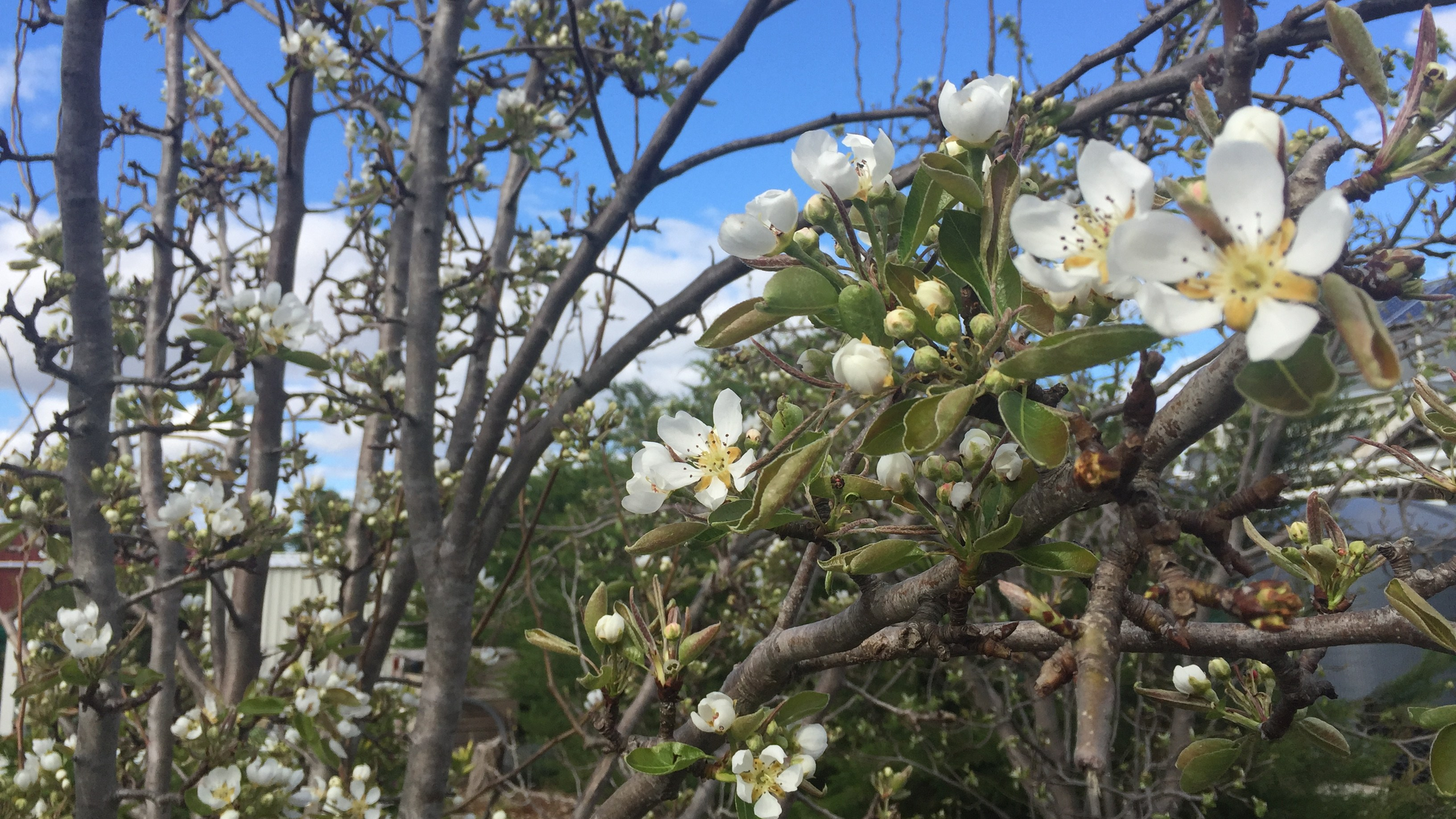 Spring – feature