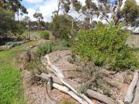 Ridge towards native walk