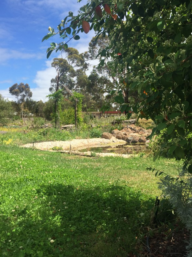 FG - pond and shade