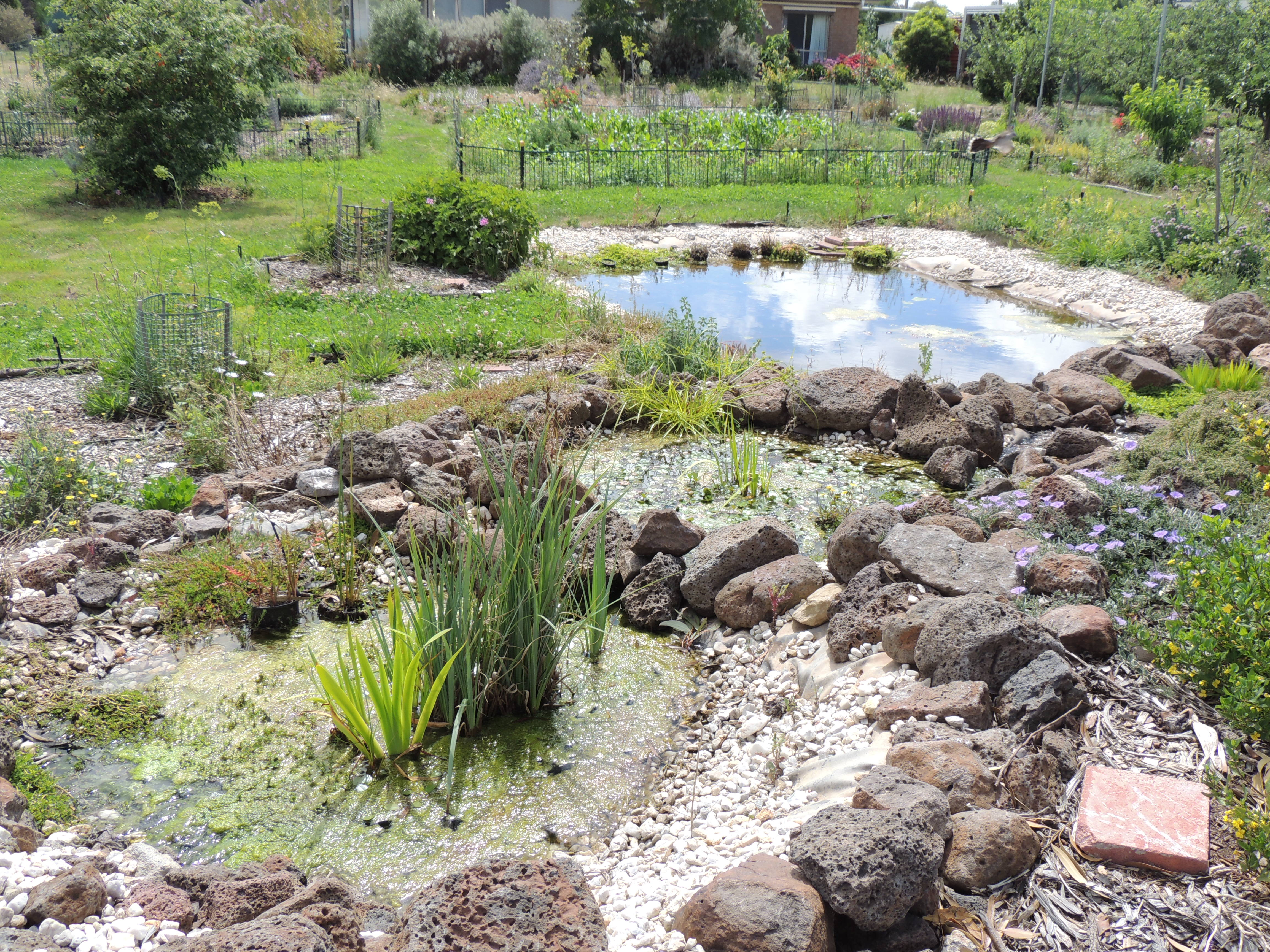 FG – pond from top