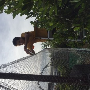 Markus clipping nets