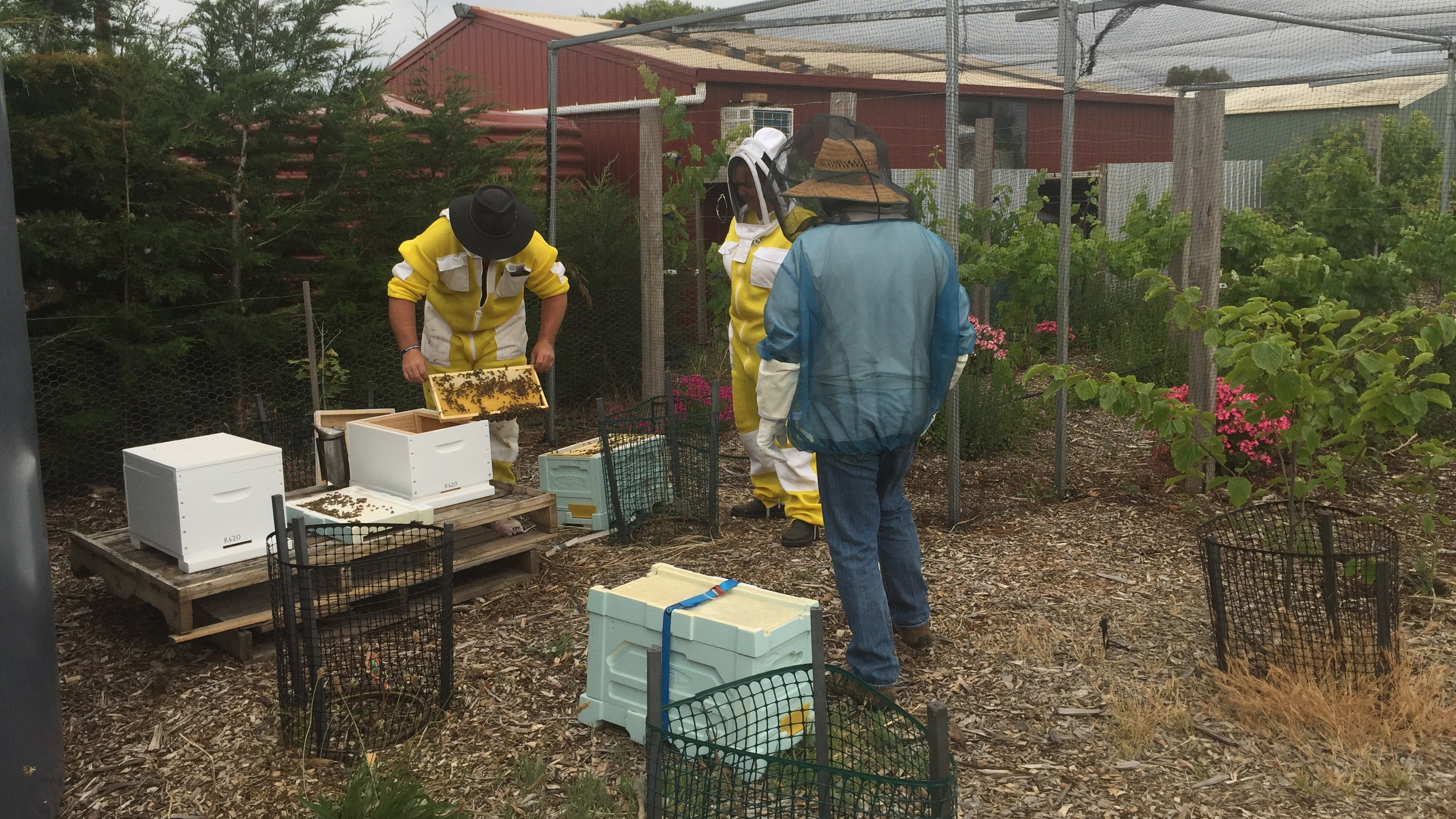 Hive – of activity